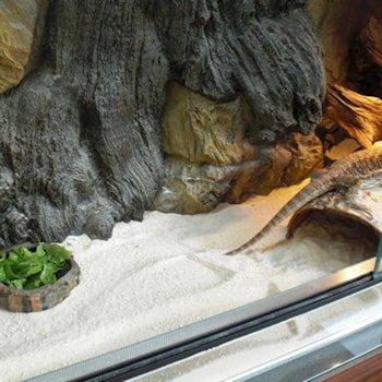 Terrarium & Aquarium